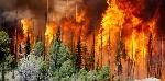 causas_naturales_de_la_deforestacion_en_espana_1502_2_600