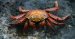 los crustáceos 2