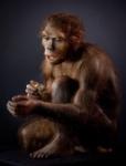 Homo_habilis_model