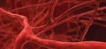 vasi sanguini