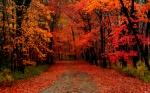 in-Autumn