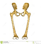 ossa-ed-articolazioni-del-femore-44453545