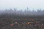 deforestation-351474_1280