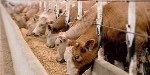 largest-animal-feed-manufacturers