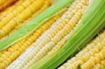corn-1605664_1280