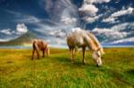 horses-2427513_1280