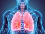 bronchi-polmoni
