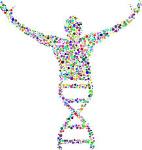 Katabolismus-Stoffwechsel-DNA