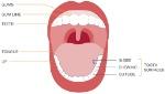 DHSV_mouthdiagram-1050x600