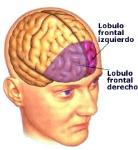 lobulos_prefrontales