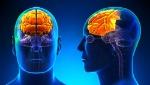cerebro-con-lobulo-frontal-iluminado