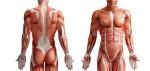 I-muscoli-fisiologia-e-funzione-FISIO-LG-ROMA