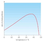 temperature and photosynthesis