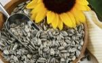 semillas-d-girasol