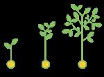 plantas-inversion-1