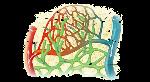Illu_lymph_capillary_es.svg