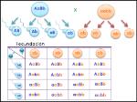mamífero dihíbrido heterocigoto