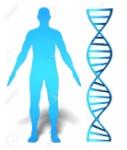 29469084-concepto-de-la-investigación-y-la-información-genética-del-gen-humano-que-ofrece-la-silueta-de-un-hombre-s-a