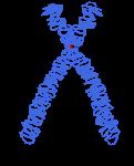 200px-Chromosome.svg
