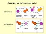 Mecanismo+de+sustitución+de+bases