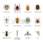 78063986-parásitos-de-la-piel-humana-y-la-vivienda-plagas-insectos-aislados-enfermedad-bug-macro-animales-morde