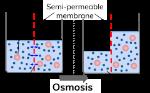 Semi permeable