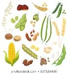 cute-tasty-legumes-grains-nuts-260nw-537156436