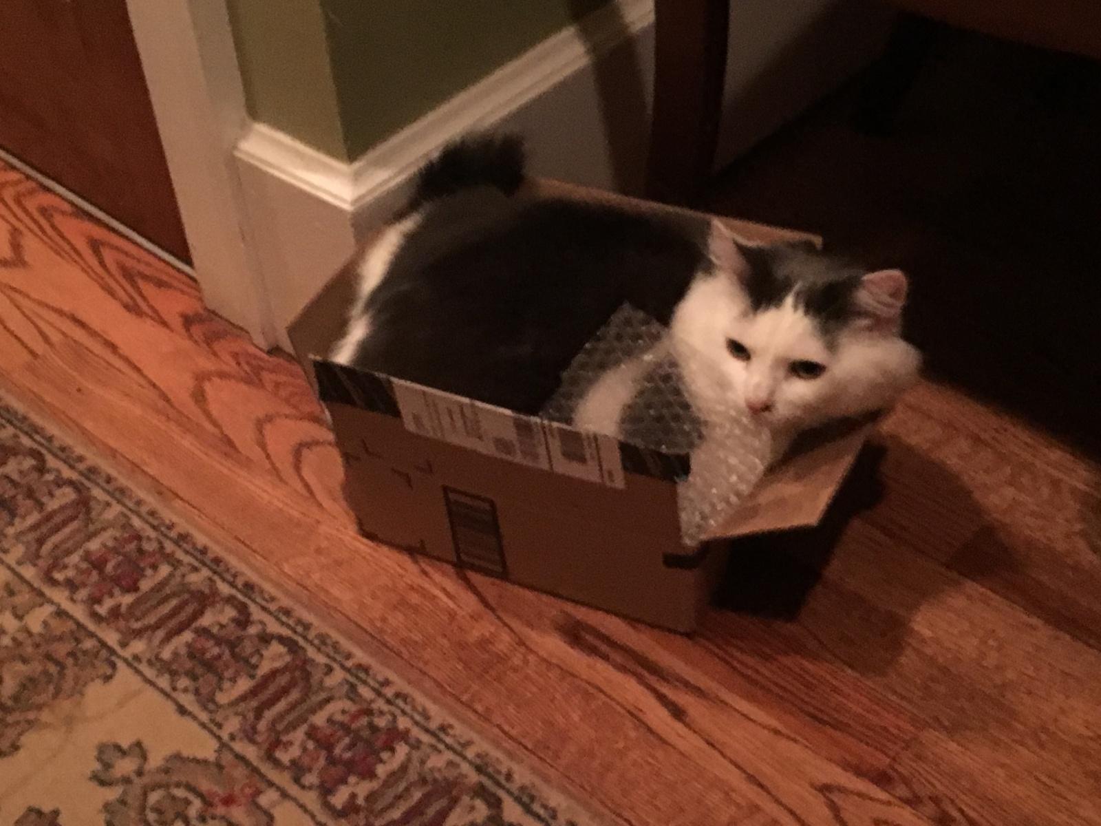 Quinn_box