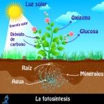proceso-de-fotosintesis