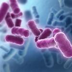 Bacilus pic