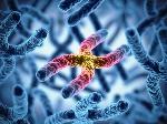 Cellule-diploidi-e-cromosomi-omologhi