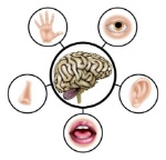 sensorial