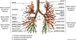 arbol-bronquial-768x410
