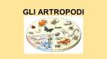 GLI+ARTROPODI