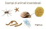 esempi_di_animali_invertebrati_45_3_600