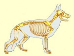 scheletro-300x230