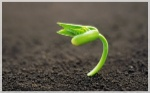 Plantas-con-semillas