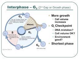 Botany G2 Phase 1 Pic