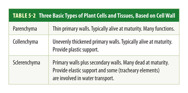 Botany Types of Cells Pic