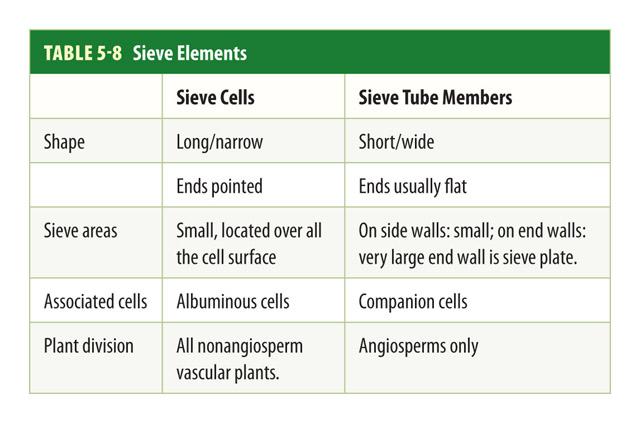 Botany Sieve Elements Pic