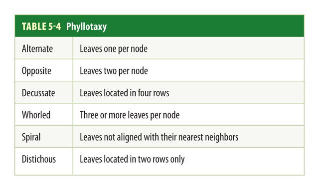 Botany Phyllotaxy Pic