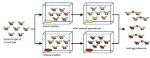 Drosophila-speciation-experiment