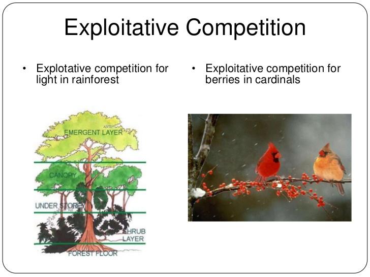 Botany Exploitation Competition Pic 1
