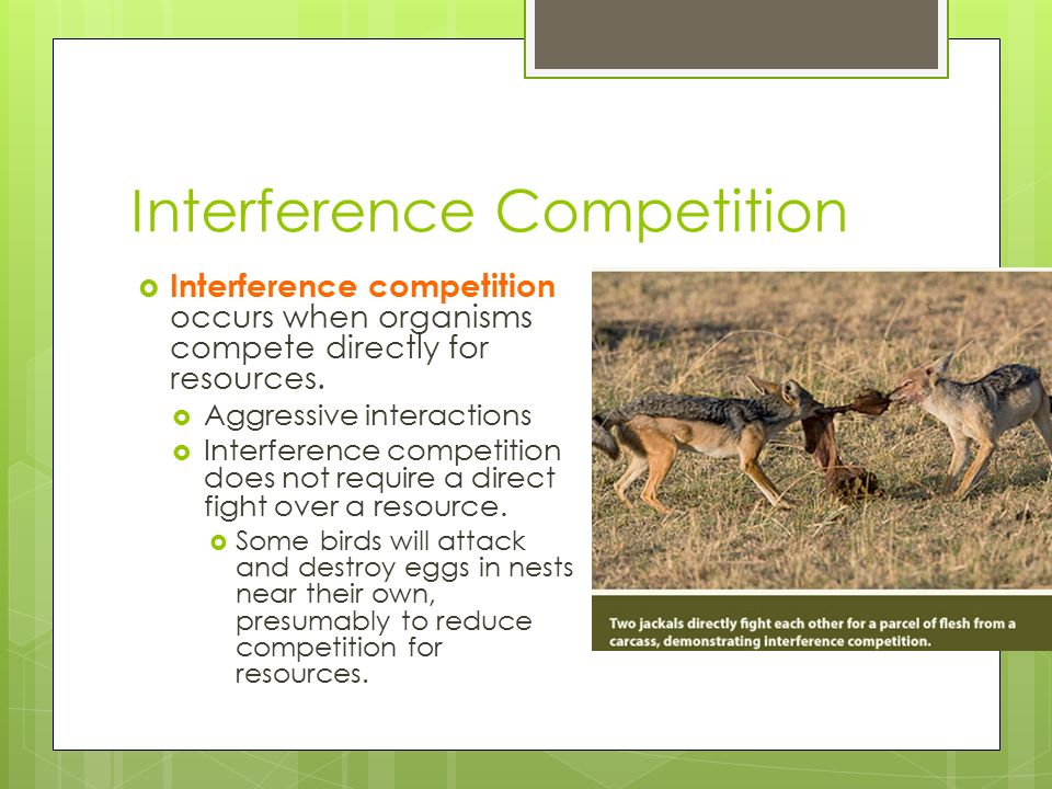 Botany Interference Competition Pic 1