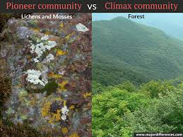 Botany Climax Community Pic 1