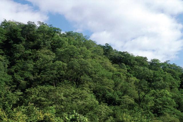 Botany Latitude Pic 4