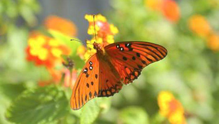 Botany Mutualism Pic 3