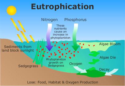 Botany Eutrophication Pic 2