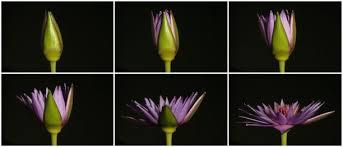 Botany Handling Time Pic