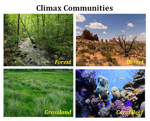 Botany Climax Community Pic 2